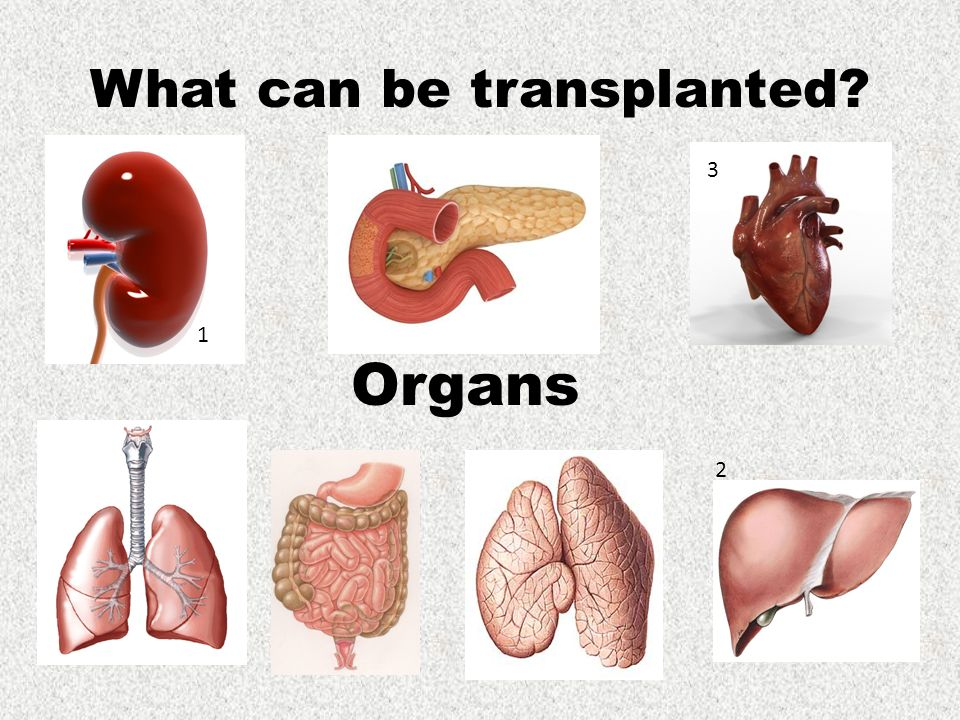 Get to know about the types of Organ Transplantation