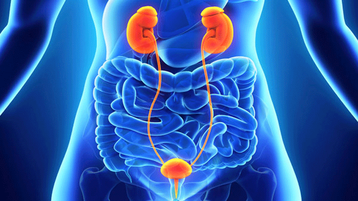 Getting acquainted with Urology treatment in Turkey